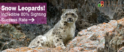 Snow Leopard Tracking Holiday